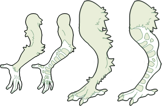 ptheran-limbs-both.png