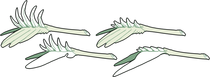 ptheran-tail-spurs.png
