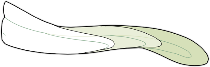 tolka-tail-length.png